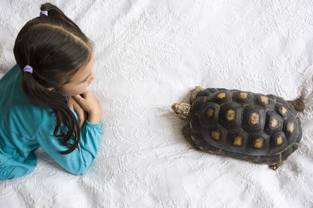 Tortoise Substrate Pets at Home