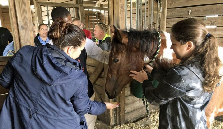 Take Care of Stabled Horses